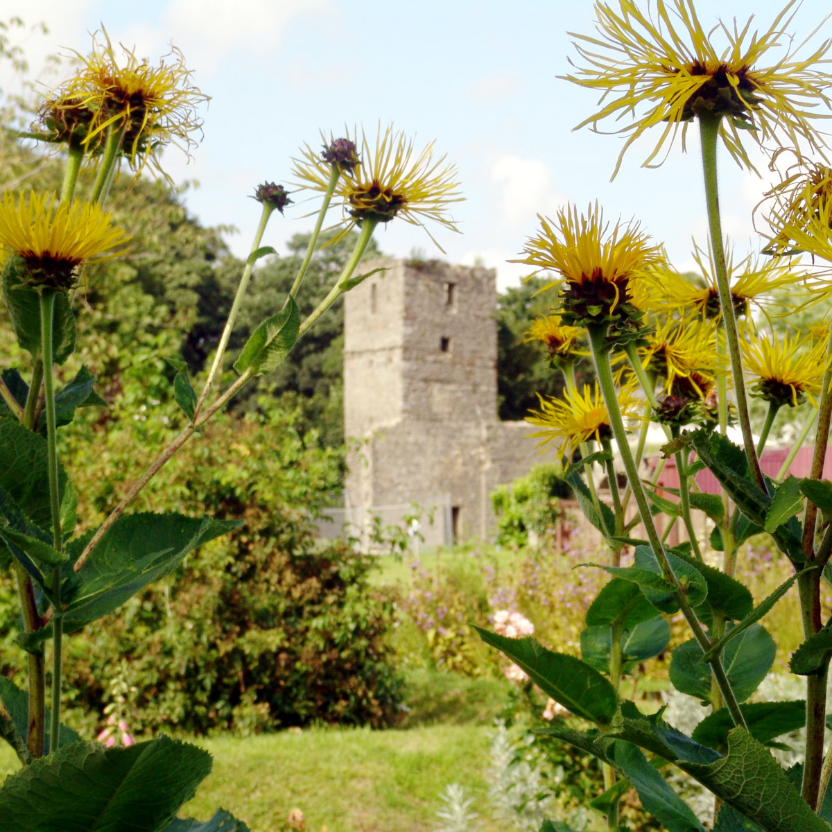 Rushen Abbey Gardens and Flowers