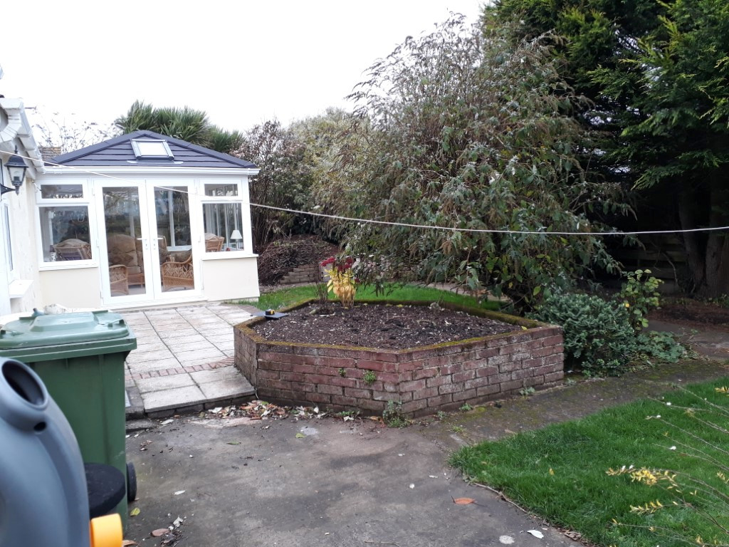 Overgrown garden with raised bed and cyprus tree